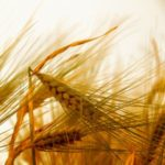 Che cos'è la malattia celiaca, intolleranza al glutine